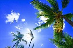 Custom - Tropical Sky Trees